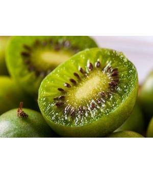 春季优质软枣猕猴桃开售,山东威海货源