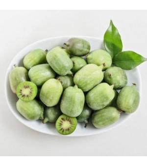 优质软枣猕猴桃苗春季开售,威海基地发货