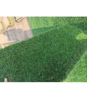 别墅绿化设计,南京绿化工程承接施工,各类草坪供应